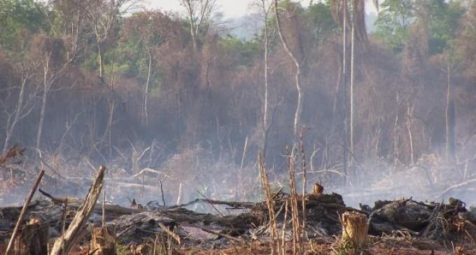 ?En Paraguay se deforesta entre mil a dos mil hectáreas de bosques por día?