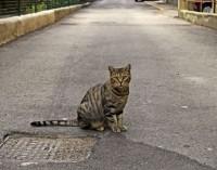 Extraña desaparición de gatos en Sajonia
