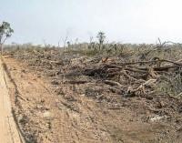 Paraguay entre los primeros países más deforestados del mundo