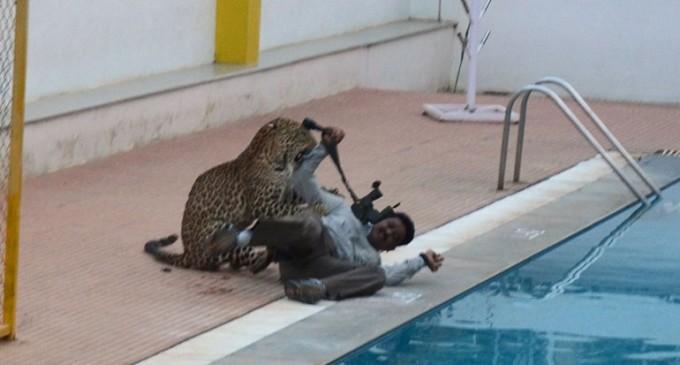 India: un leopardo entró a una escuela y dejó seis heridos