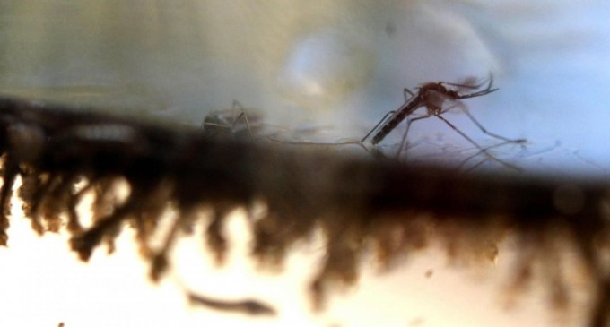 Zika: Obama trata de tranquilizar a los estadounidenses