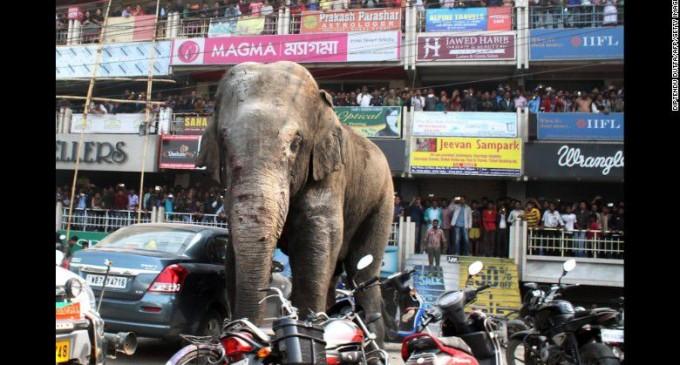 Un elefante causa conmoción en la India