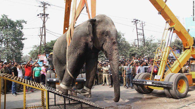 elefante-india-4