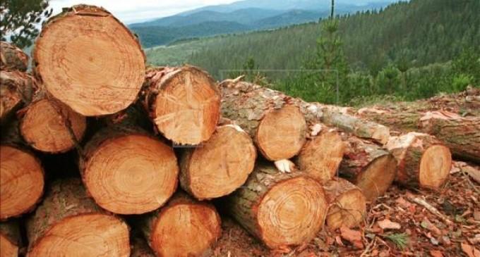 Paraguay, Argentina y Bolivia en un mes talaron 25 millones de árboles
