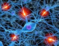 Los recuerdos perdidos por el alzhéimer pueden recuperarse