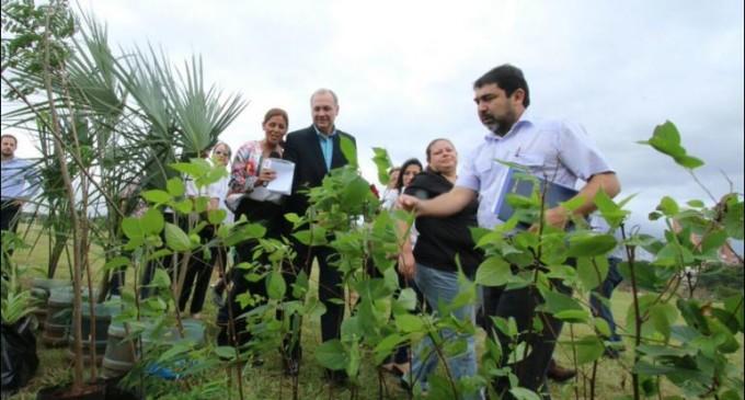Inician arborización en la Costanera con 700 plantas nativas
