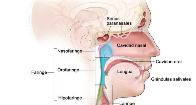 Cáncer de cabeza y cuello: detección temprana es clave para su cura