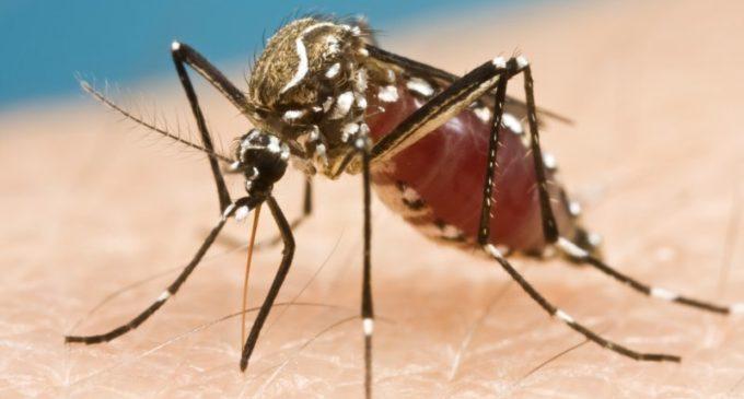 Ministerio de Salud investiga dos casos de muerte a causa del dengue