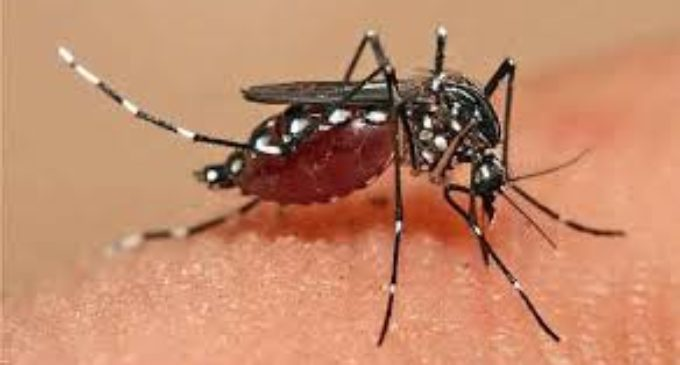 Clínicas descarta caso de dengue hemorrágico, de momento