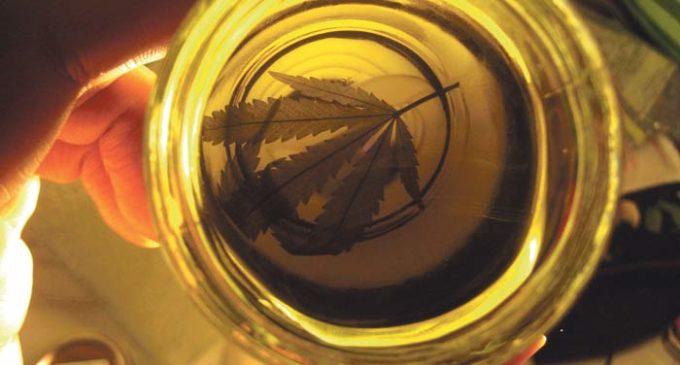 Elogian beneficios del aceite de cannabis y piden legalización en Paraguay