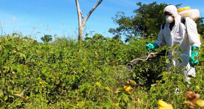 SENAVE trabaja para que langostas no se trasladen a áreas productivas del Chaco