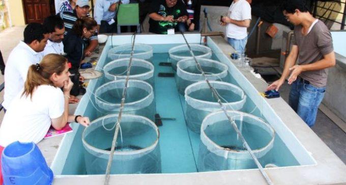 Importante crecimiento de la piscicultura en nuestro país
