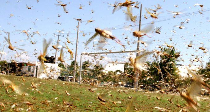 """""""Tenemos que ir trabajando en el control de estas plagas a fin de evitar la dispersión"""""""