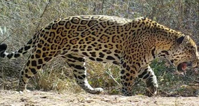 SEAM trabajará en proteger a animales amenazados