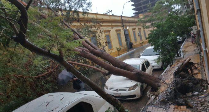 Bomberos afirman que despejarán tramos de árboles caídos