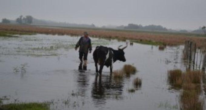 Inundaciones de nuevo golpean a Alberdi
