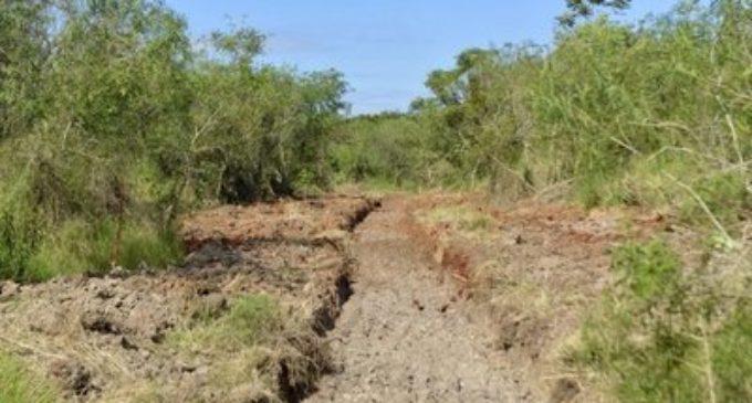 SOS Paraguay pide a MOPC buscar alternativas ante pretensión de tala de árboles del Parque Guasu