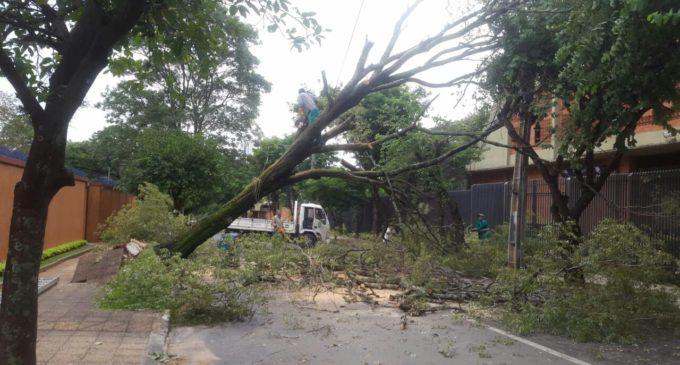 Municipalidad informa de árboles caídos en varios puntos de Asunción