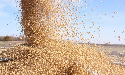 Sojeros reafirman rechazo a aumento al impuesto al grano