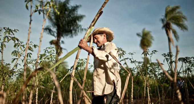 Senave señala crecimiento en la importación frutihortícola, mientras pobreza se agrava en el campo
