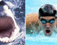 "¡Duelo entre ""tiburones""!: Michael Phelps competirá contra un escualo"