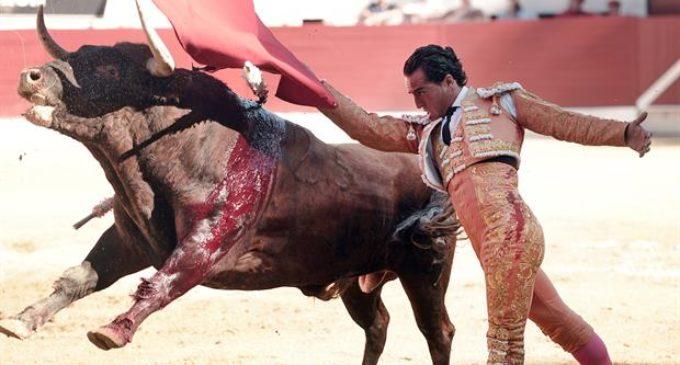 Murió un torero español tras sufrir una cornada en un pulmón