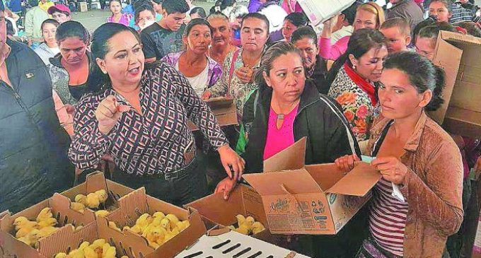 Ministro de agricultura molesto por acto de proselitismo en entrega de pollitos y alimentos