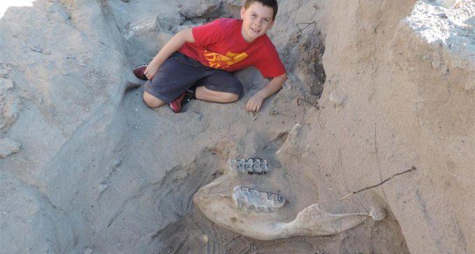 Un niño tropezó en el desierto y descubrió un fósil de más un millón de años