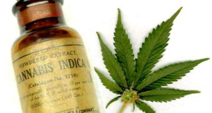 Aceite de Cannabis a la venta en nuestro país