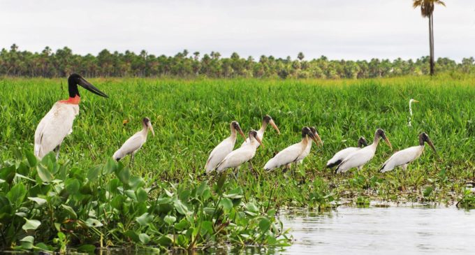 ¿Sabías que el Pantanal Paraguayo es unos de los humedales de agua dulce más grande del mundo?