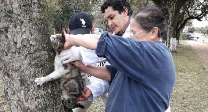 Misiones: Vacunan a más de 2 mil animales contra la rabia