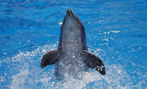 España: Muere un delfín luego de que cientos de bañistas intenten fotografiarse con ella