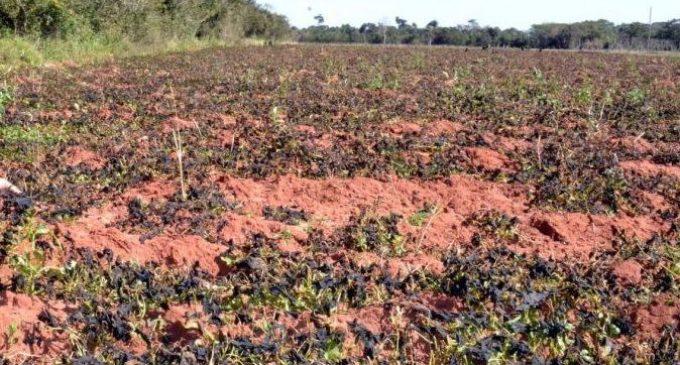 Diputados aprueban declaración de emergencia para agricultura familiar