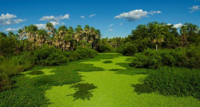 Presentarán proyecto para declarar al Pantanal paraguayo como Patrimonio de la UNESCO