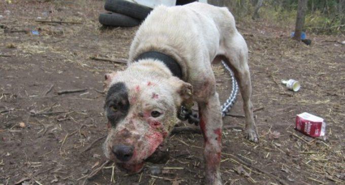 Todo aquel que maltrate o mate a un animal se expondrá a penas carcelarias