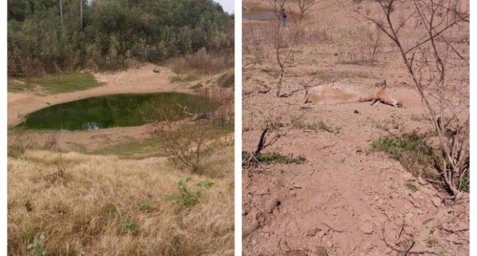 """Comisión del Pilcomayo justifica sequía del río: """"No se trabajó durante 20 años"""""""