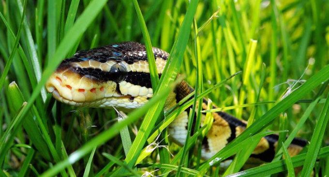 Un 'tarzán' chino de 10 años sobrevive 24 días comiendo serpientes y hierbas
