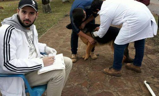 Unos 2.700 animales vacunados contra la rabia en San Juan