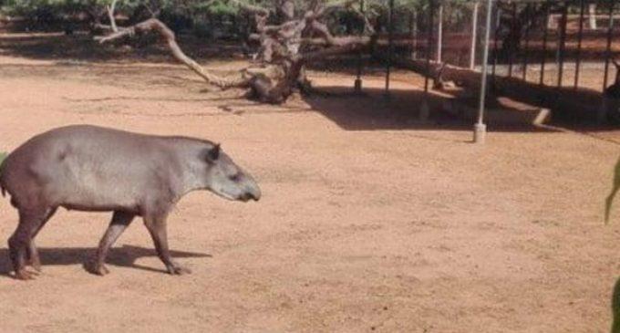 Hambre en Venezuela: robaron animales de zoológicos para comérselos