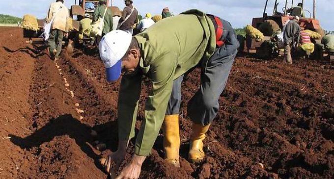 Ministerio de Agricultura lleva un mes sin entregar semillas a productores
