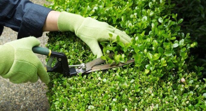 Ofertarán 100 vacancias para trabajos de jardinería en el barrio San Francisco