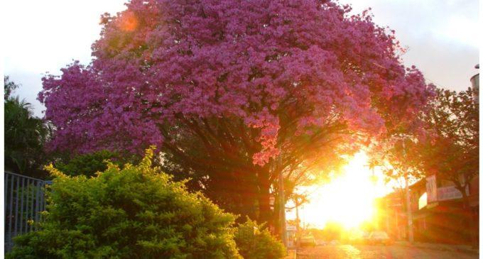 Calurosa bienvenida a la primavera