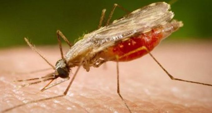 Alertan sobre casos de zika, dengue y chikunguña
