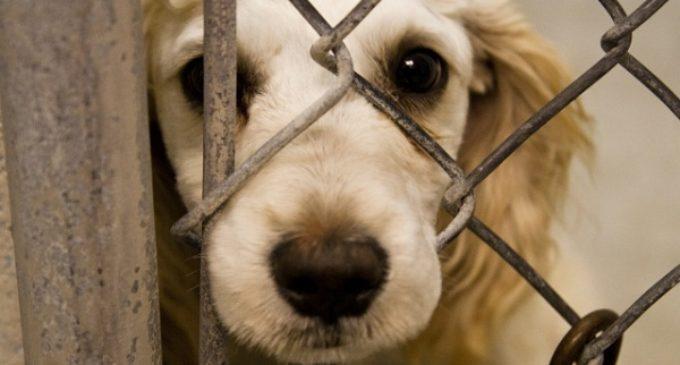Ejecutivo promulga ley que establece penas carcelarias por maltrato animal