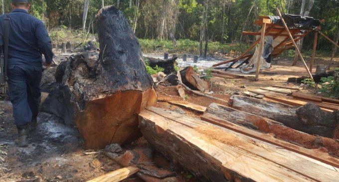 Imputan y piden prisión de 16 personas por deforestación