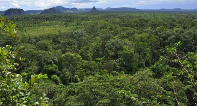 Preocupación por posible modificación de Ley Forestal