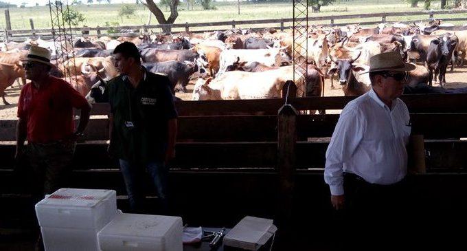 ARP garantiza que brote de brucelosis no afectará a ganado