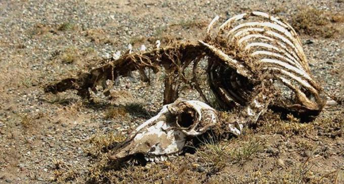VIDEO: Hallan los restos de un 'dragón' en China
