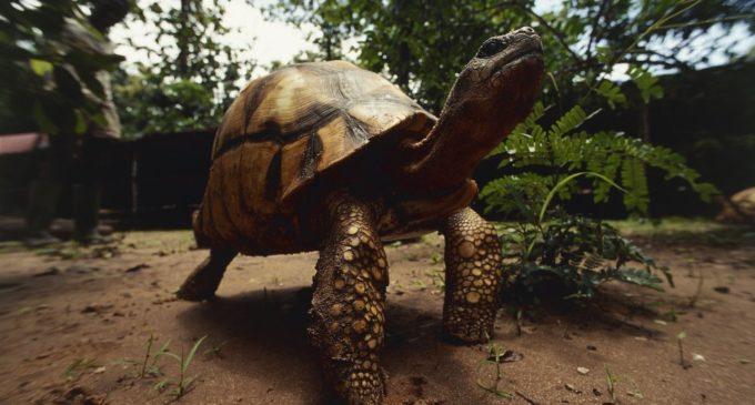 Más 25 mil animales y plantas luchan por sobrevivir en el mundo