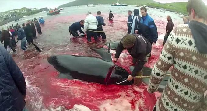 """Matan ballenas y delfines """"por tradición"""""""